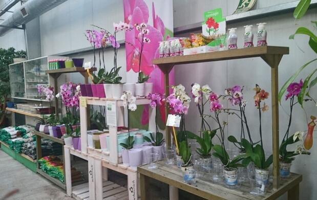 Orquídea varios colores 6,70€