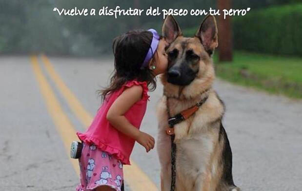 Taller adiestramiento canino INDIVIDUAL