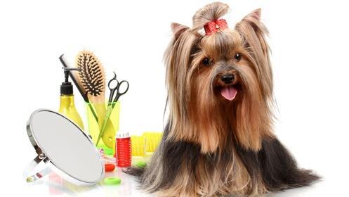 Presume de mascota con esta sesión de baño para tu perro