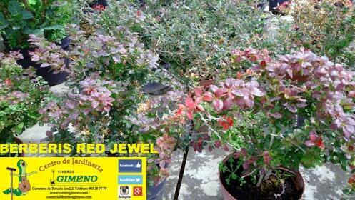Arbusto o conífera perfectas para plantar ahora