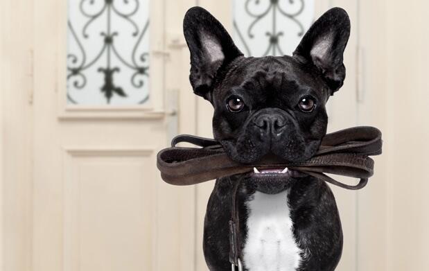 Sesión completa de baño para tu perro