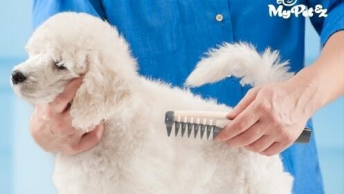Peine eléctrico cortanudos perros MYPETEZ