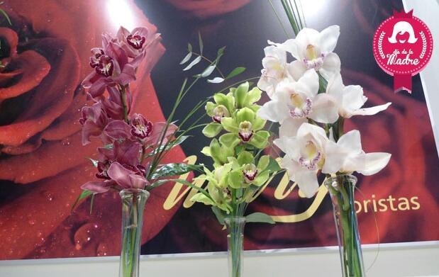 Orquídea en jarrón para Mamá por 12,90€