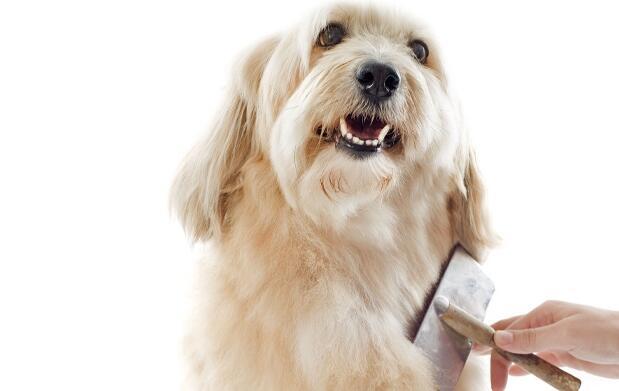 Peluquería con corte para perros 16€