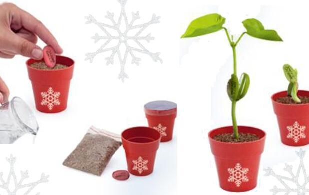 Planta de Navidad por 2,90€