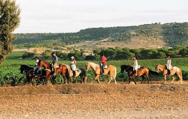 Ruta de 2 horas a caballo 15€