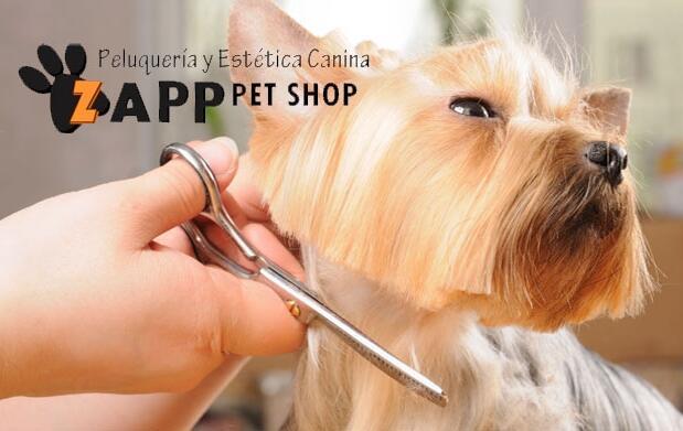Sesión de peluquería canina por 9€