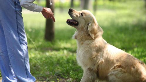 Taller de 3 días de adiestramiento canino profesional