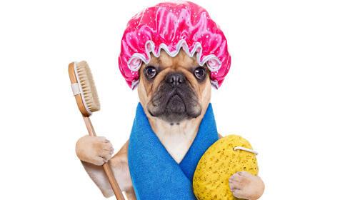 Autolavado para tu mascota con champú y secador