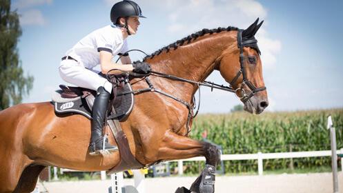 Aprende a montar a caballo con tres clases de equitación