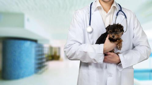 Cuida a tu mascota con esta revisión y vacuna para perro