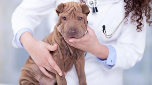 ¡Veterinario con descuento! Chequeo y vacuna perro o gato