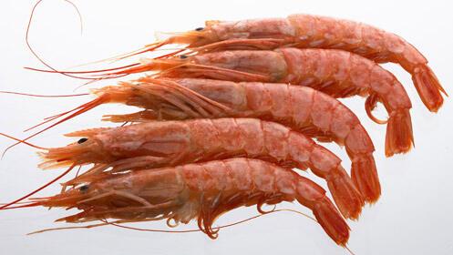 Variedad de pescado fresco con envío a domicilio